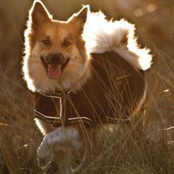 AMIGO DOG RUG - Image